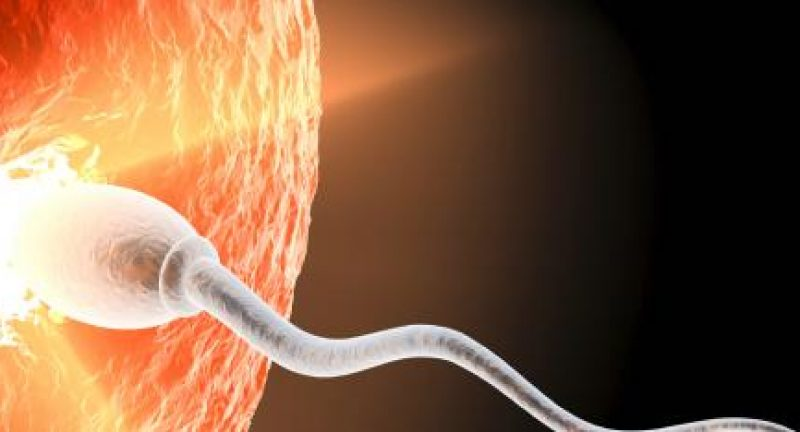 IVF Monitoring: What is it?